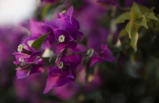 island-flora-fauna-03